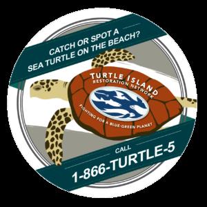 sea turtle sticker1-01